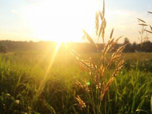 conjuntivitis alergica y cambios estacionales
