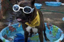 gafas de natación para evitar infecciones oculares en verano